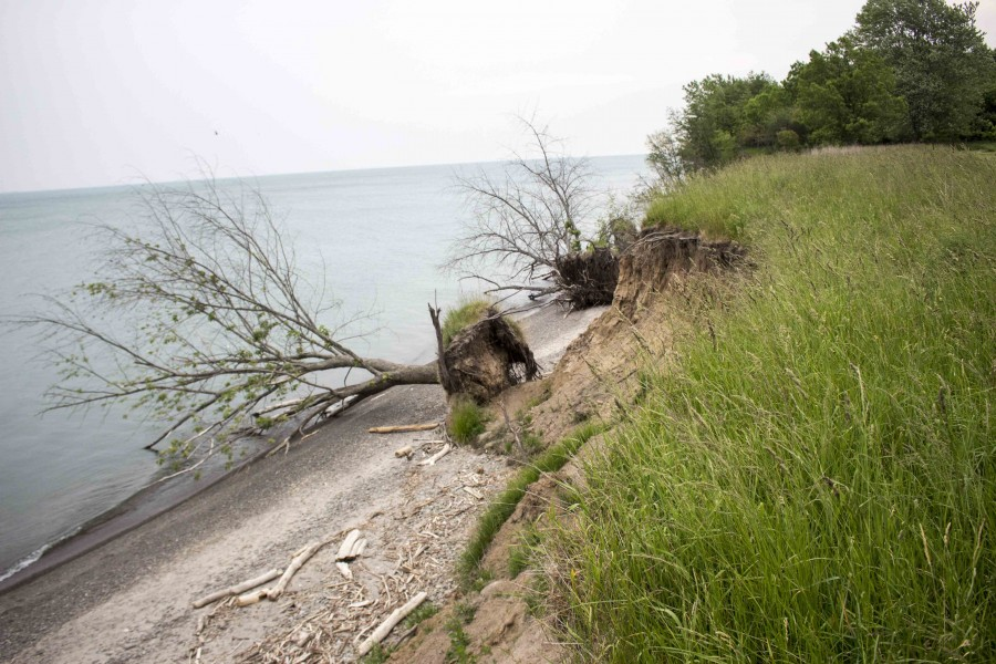 Bank swallows, Niagara Shores, coastal erosion.